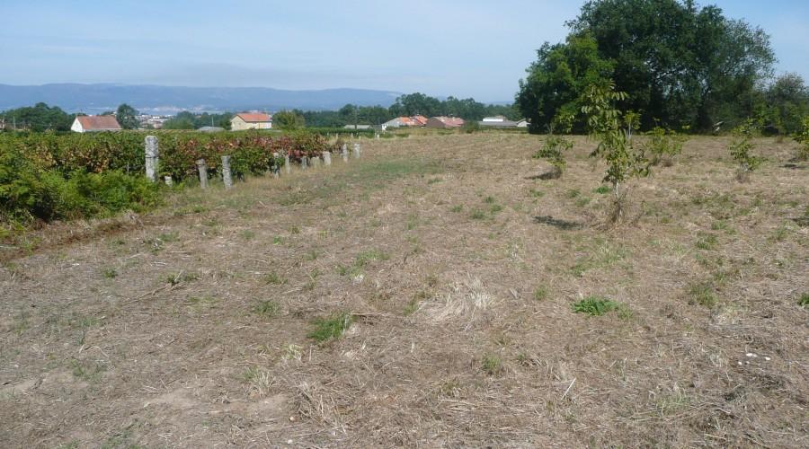 Inmobiliaria Juan Rey 19